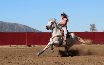 Lessons from Falling Off the Horse – Conscious Choice
